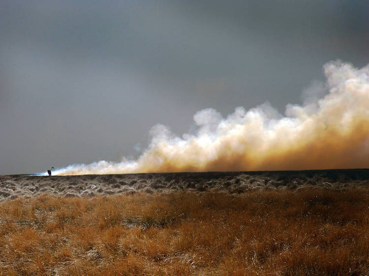 The burning field