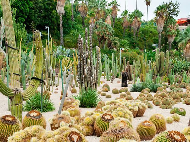 Jardí Botànic