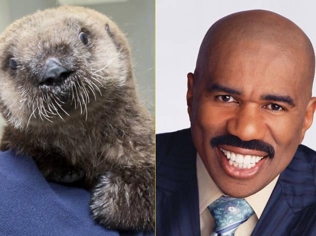 Luna the Otter versus Steve Harvey