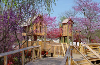 Treehouses at The Morton Arboretum