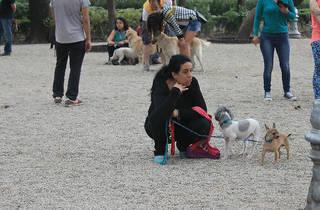 Zona canina del Parque México (Foto: Time Out México)