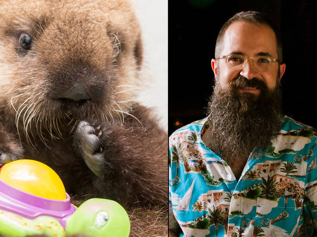 Luna the Otter vs. Paul McGee