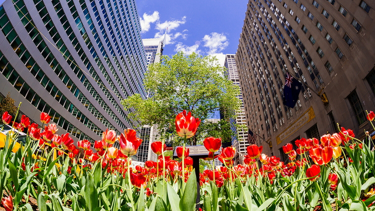 20 beautiful photos of NYC in spring