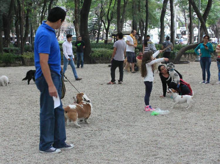 Zona canina del Parque México