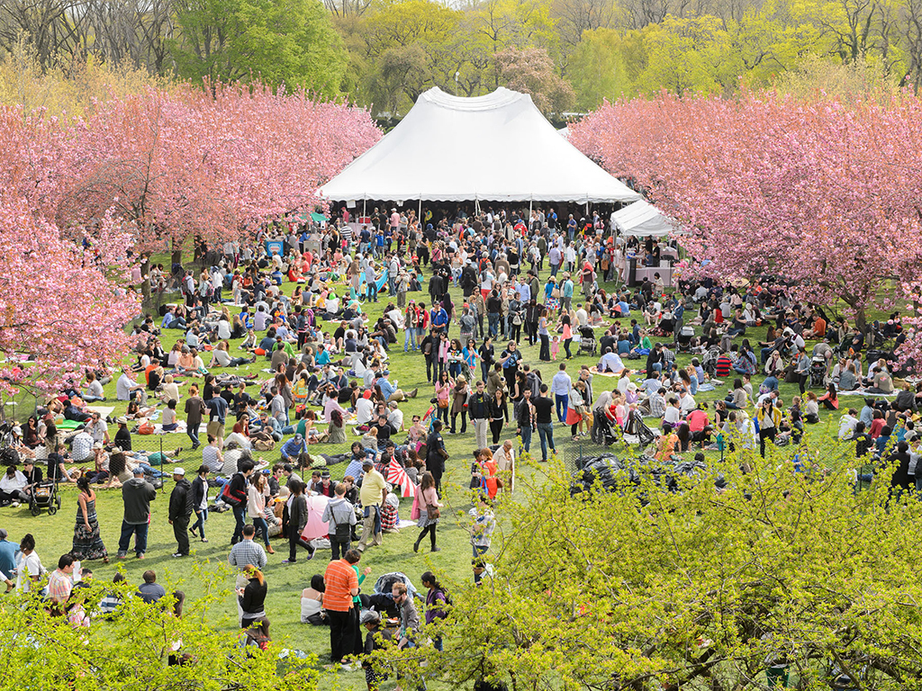 Photos: Sakura Matsuri 2016 at Brooklyn Botanic Garden