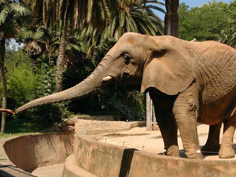 Zoológico de Chapultepec (Zoológico Alfonso Herrera)