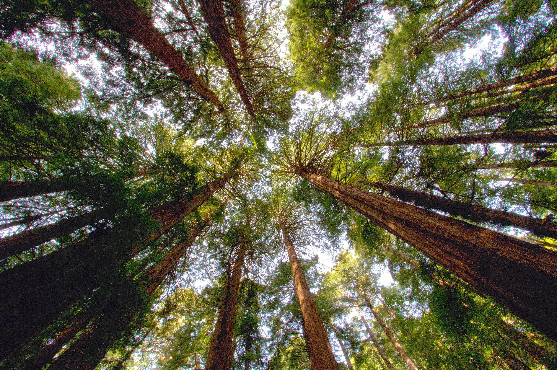 Descobrint l'Arborètum de Sequoies