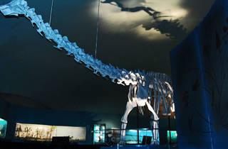 Museo de Historia Natural (Foto: Miguel Etc.)