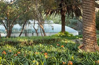 Domingo verde en el Bosque de Chapultepec