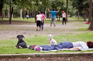 Parque Tamayo (Foto: Alejandra Carbajal)