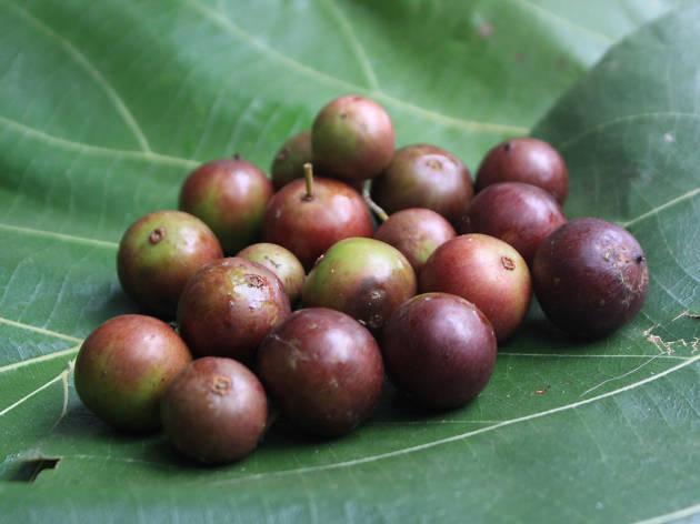 Uguressa is a fruit in Sri Lanka