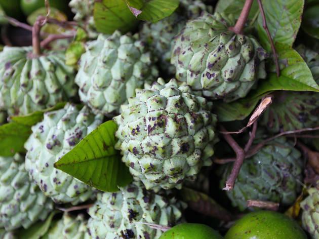 Anoda is a fruit in Sri Lanka