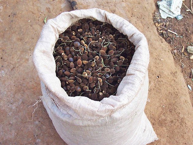 Velvet Tamarind is a fruit in Sri Lanka