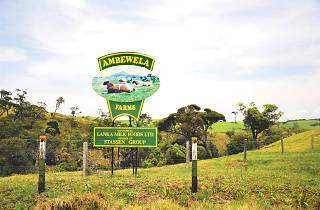 Ambewela Farms in Nuwara Eliya
