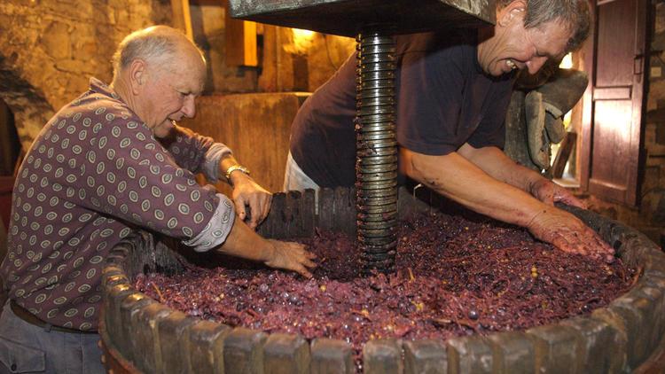 Making wine at Konoba Tomić, Gornji Humac