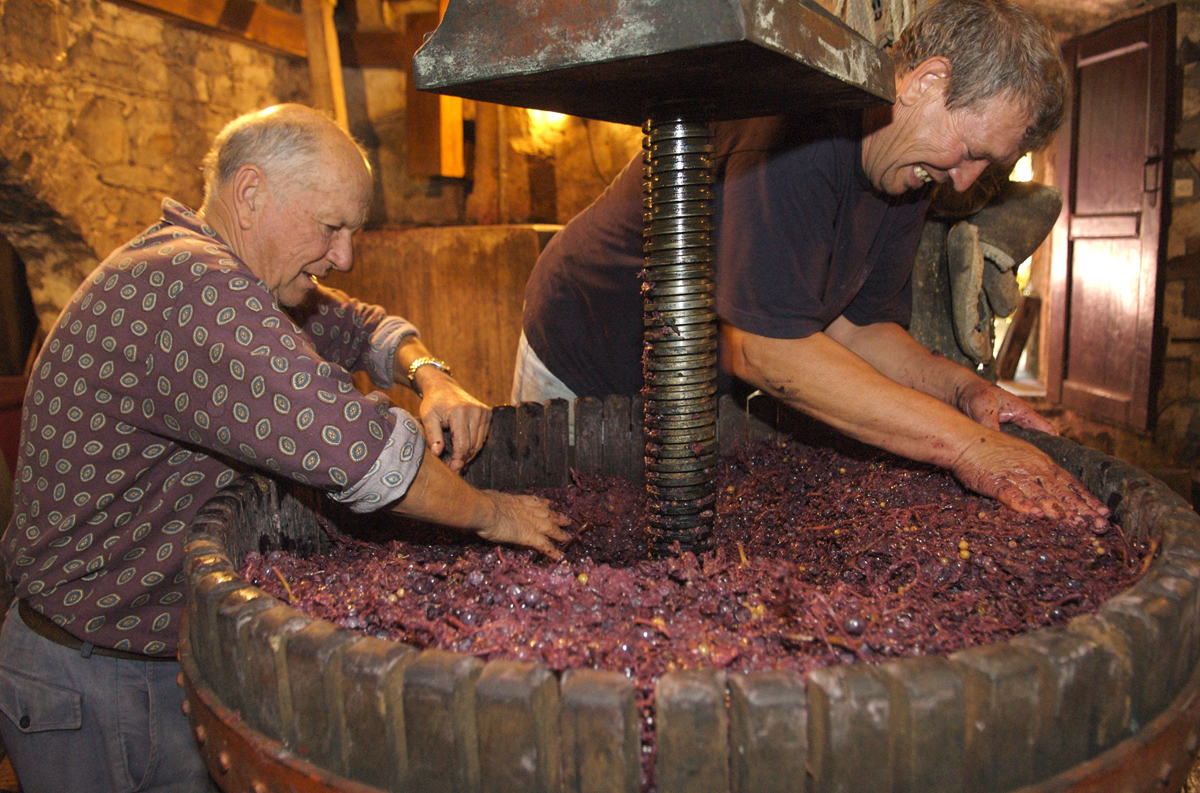 Making wine at Konoba Tomić, Gornji Humac