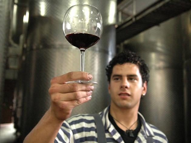 Pelješac wine guide