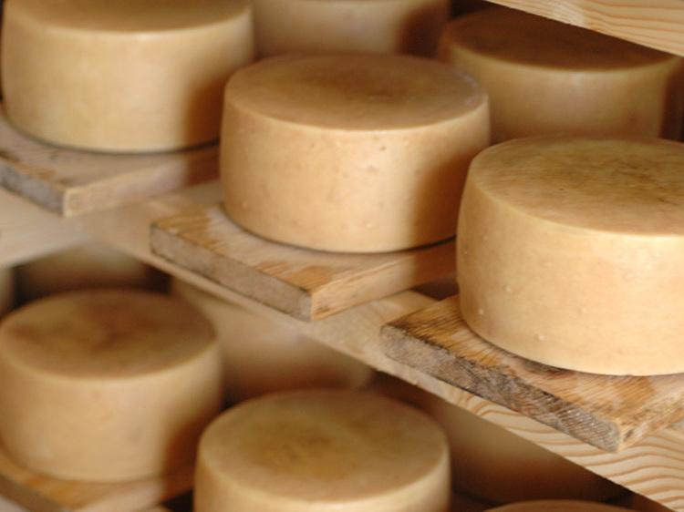 Sample Croatian cheese
