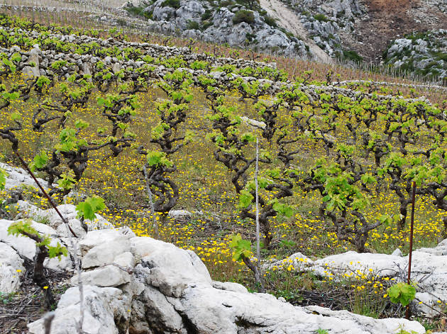 milos winery, wineries, Peljesac Peninsula, Korcula and Peljesac, croatia