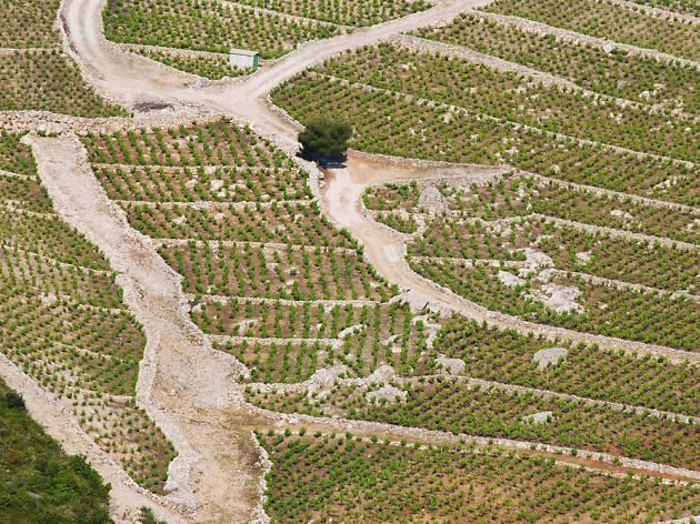 Milos Winery