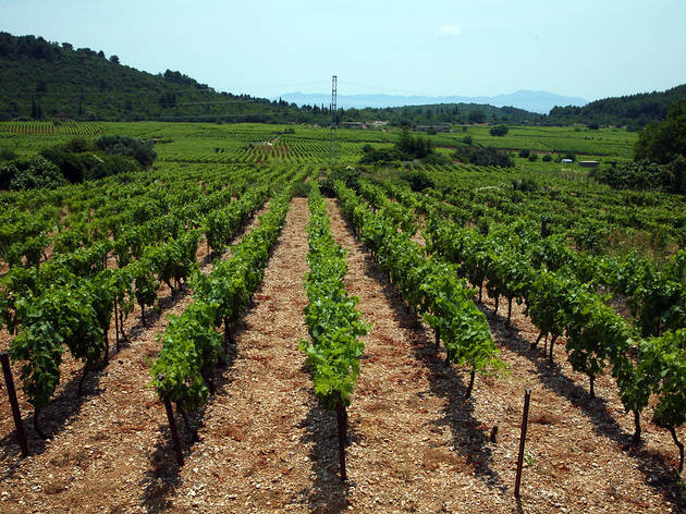 Vineyards, Čara, Korčula