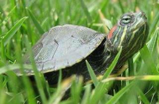 Petunia (Foto: Cortesía Tania del Río)