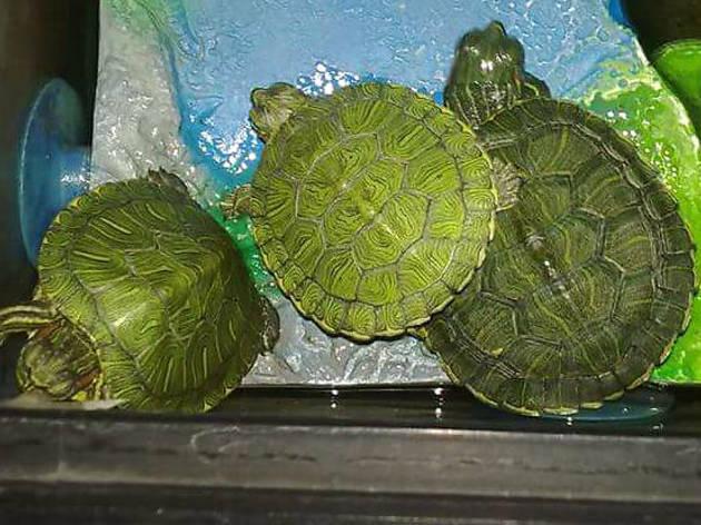 Tortugas (Foto: Cortesía Óscar Chávez)