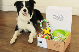Pet Mail (Foto: Cortesía Pet Mail)