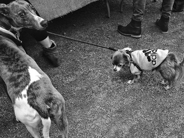 two dogs adidas