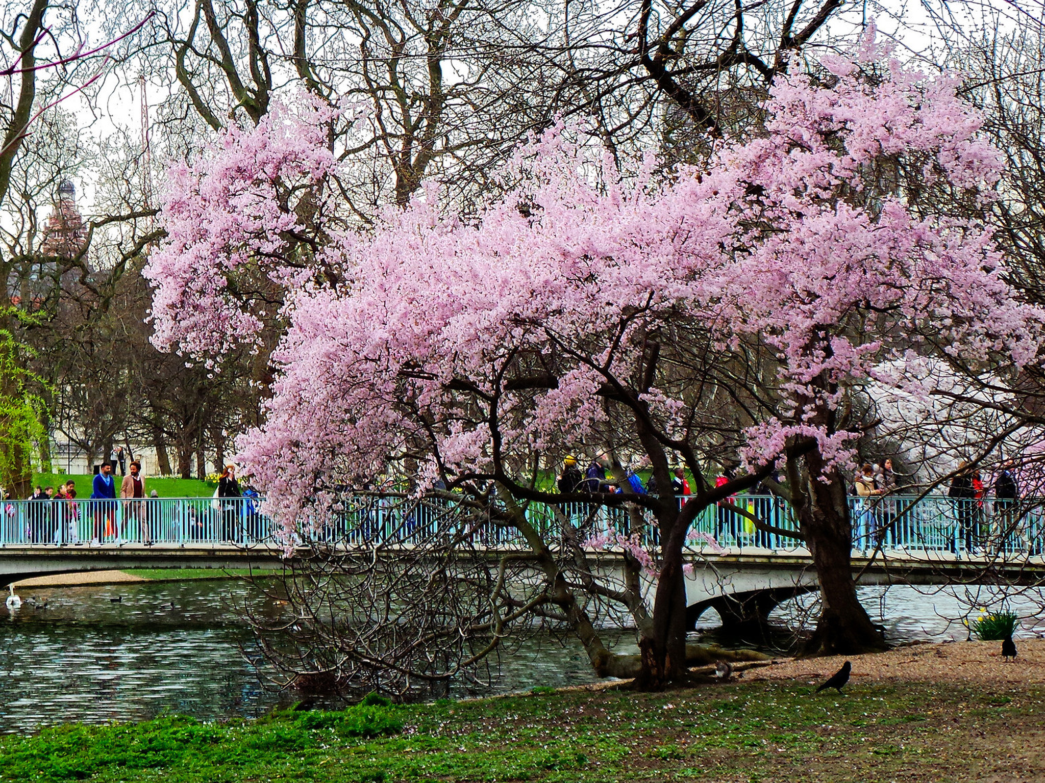 Blossom at St James Park