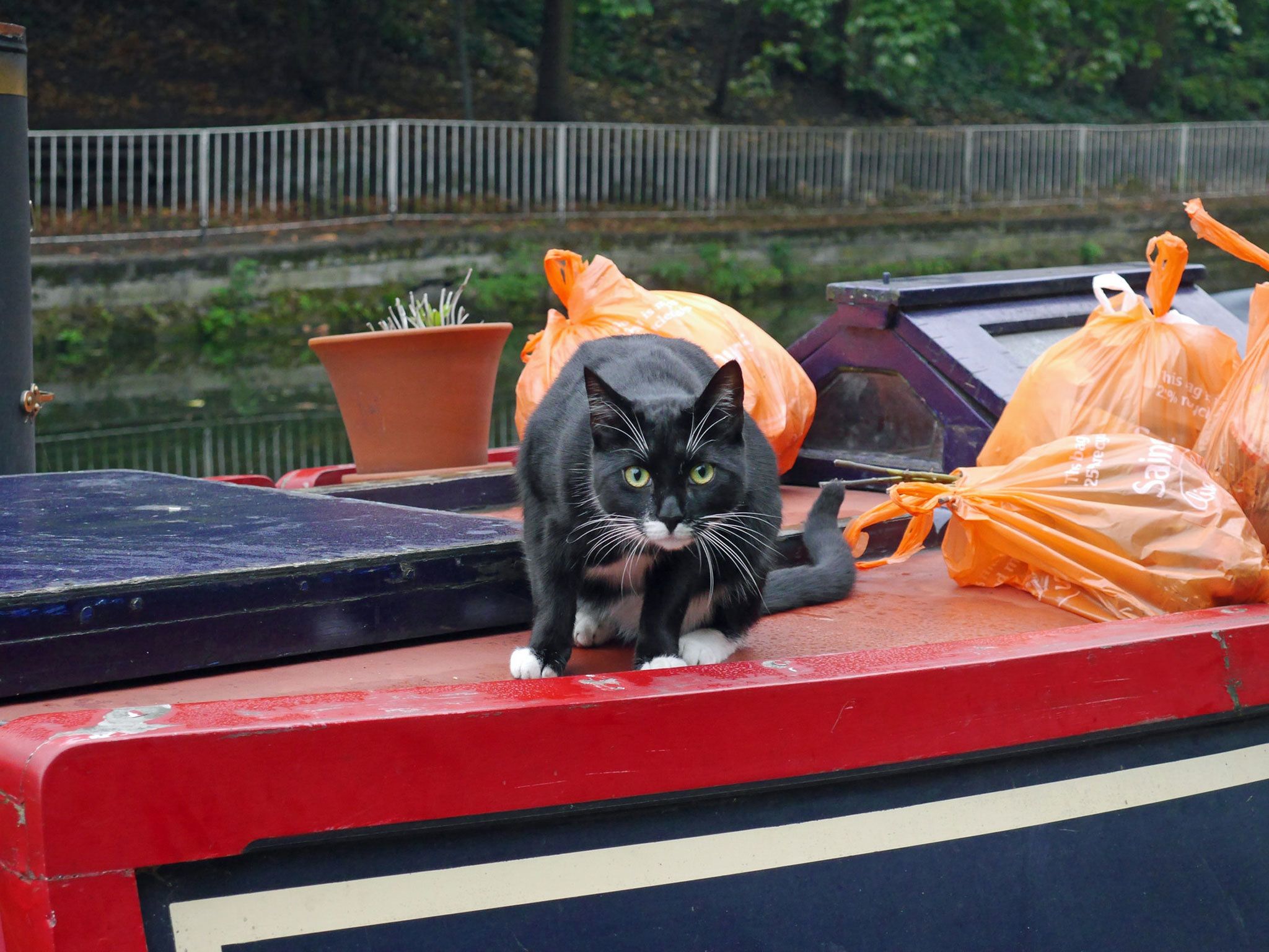 Cat on a canal boat