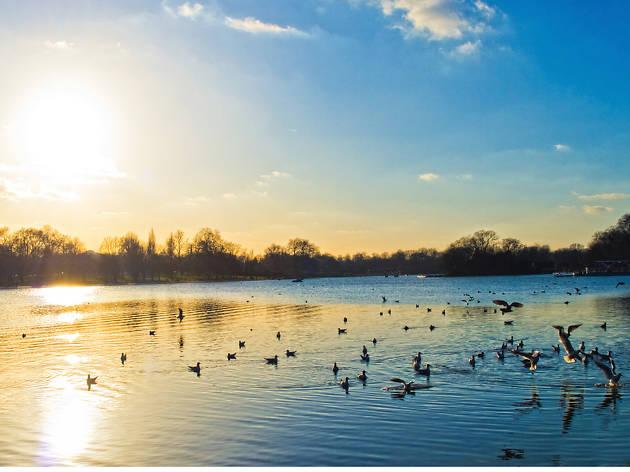 Hyde Park Pond