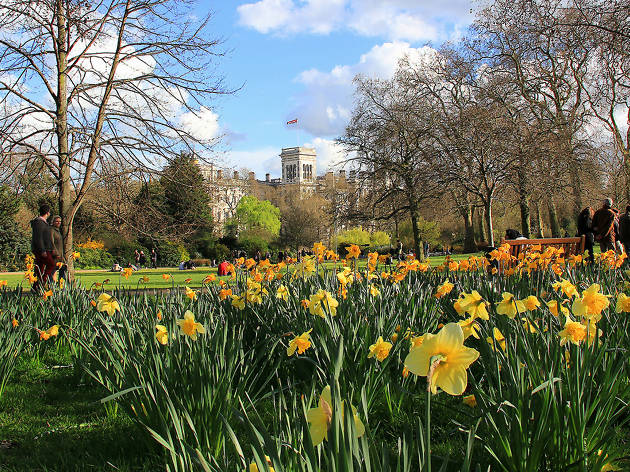 Daffodils at St James Park