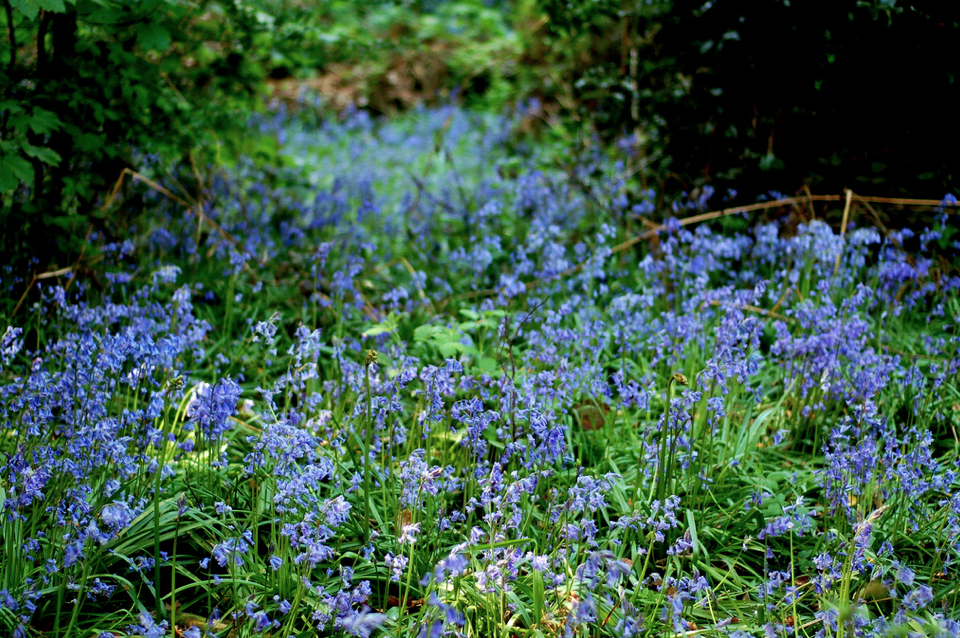 Winterbourne Botanical Gardens, Birmingham