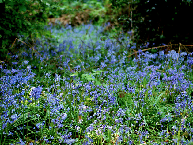 Winterbourne Botanical Gardens