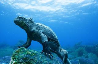 Galápagos 3D