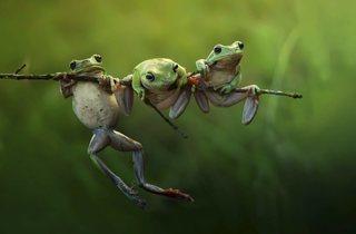 (© Harfian Herdi, Indonesia, Shortlist, Nature &Wildlife, Open, 2015 Sony World Photography Awards)