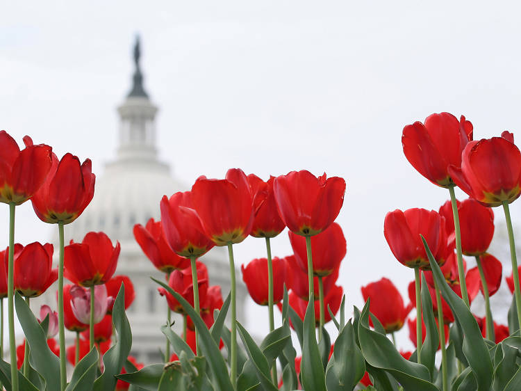 Cool tours of D.C. worth taking