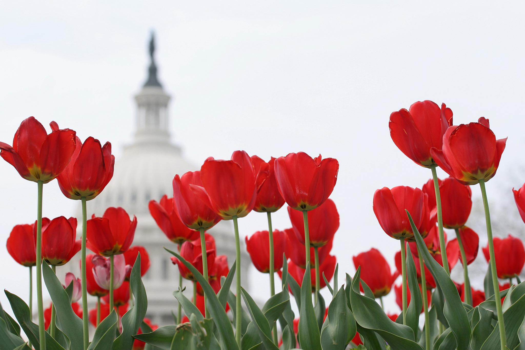 Cool Washington, DC tours worth taking