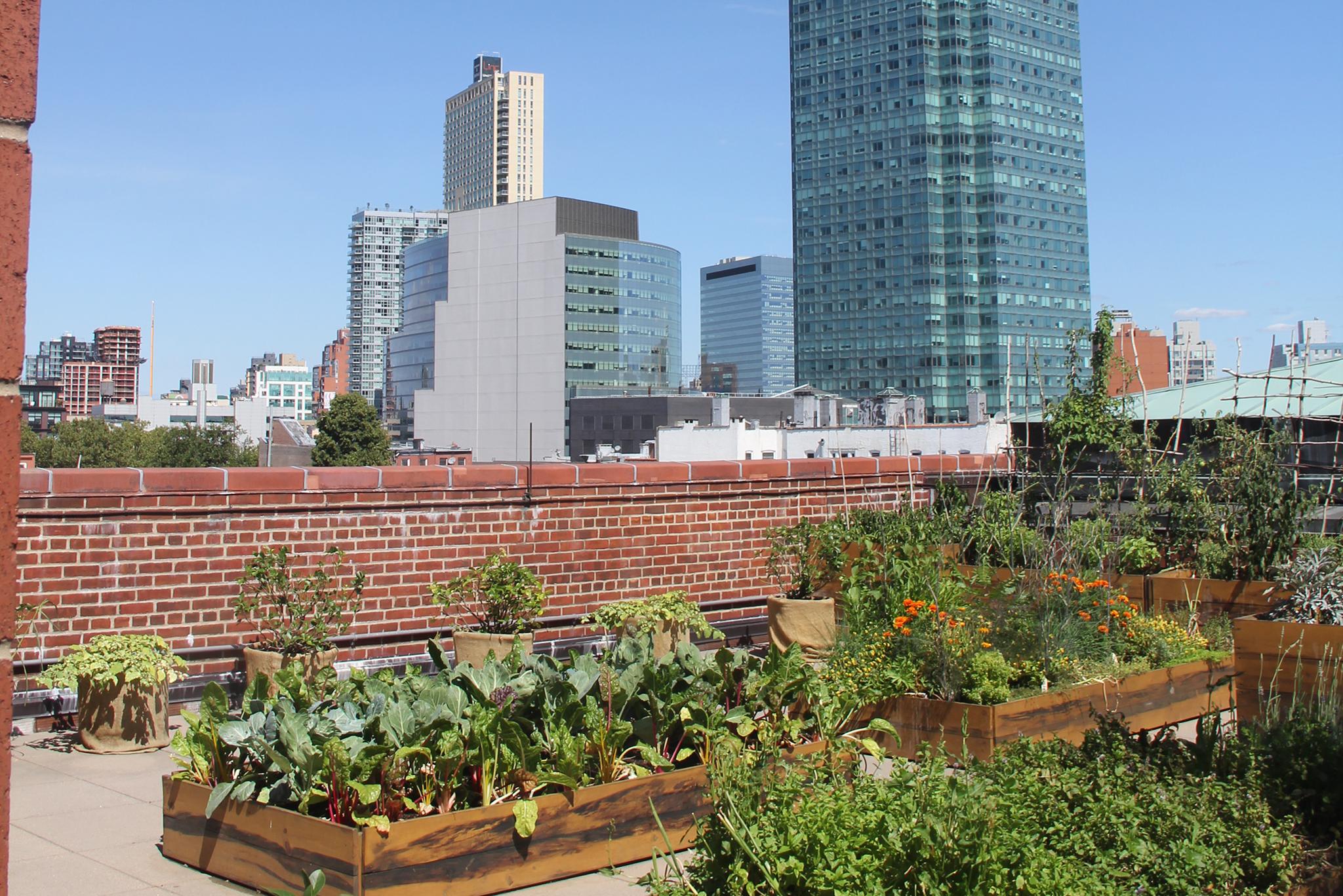 MoMA PS1 rooftop garden
