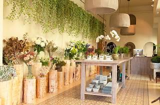 Moss Floristas