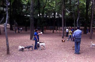 Zona canina Parque Hundido