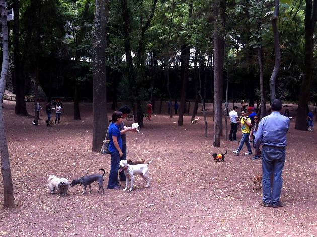Zona canina del Parque Hundido