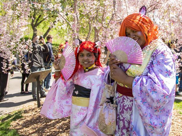 See photos from the 2015 Sakura Matsuri Cherry Blossom Festival