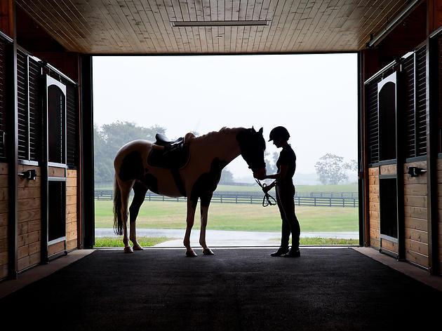 Equi-spective horse encounter