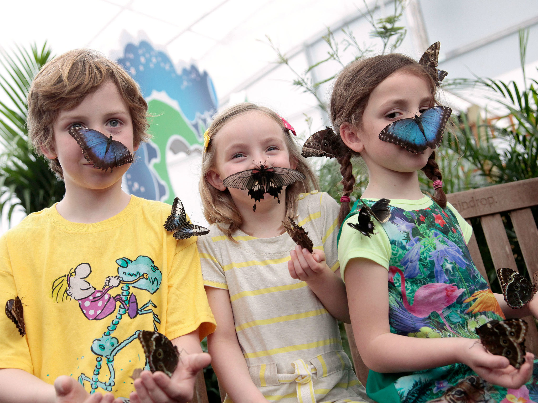 Win tickets to Sensational Butterflies and a hotel stay for two adults and two children