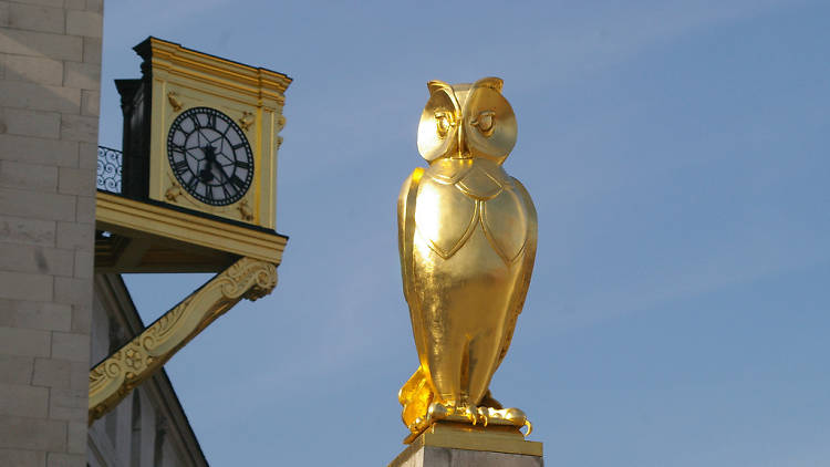 A golden owl on the Owl Trail