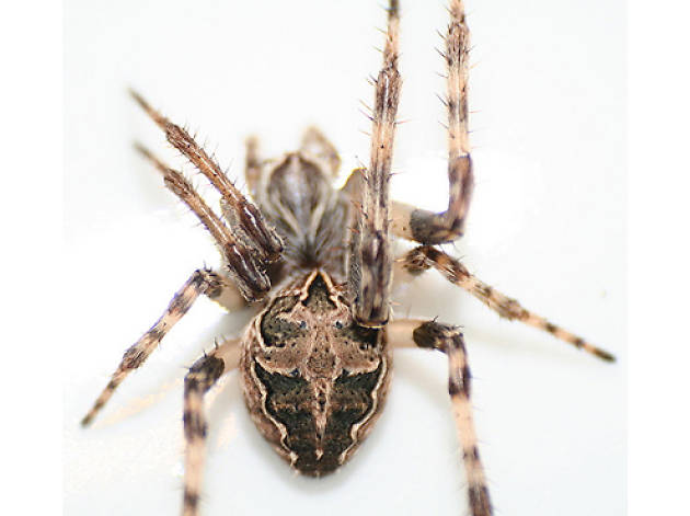 Watch out for flying spiders this spring
