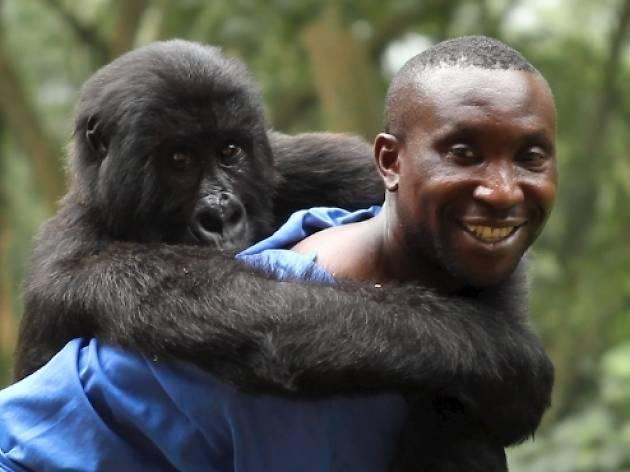 MESYM Documentary Night #23: Virunga