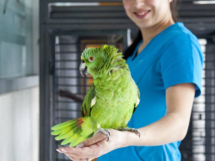 Exotic Pet Medical